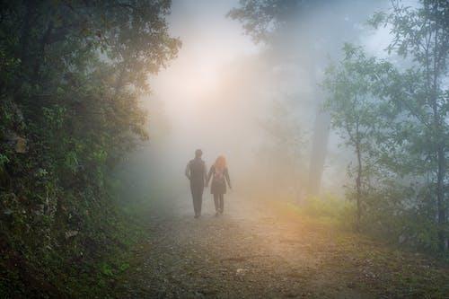 Бесплатное стоковое фото с arboles, день, дерево, дождь