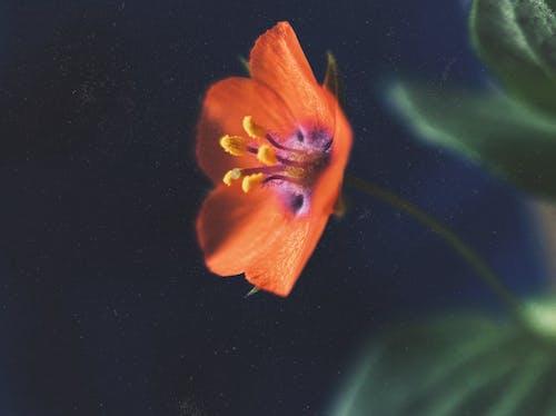 Fotos de stock gratuitas de flor, flor silvestre, macro