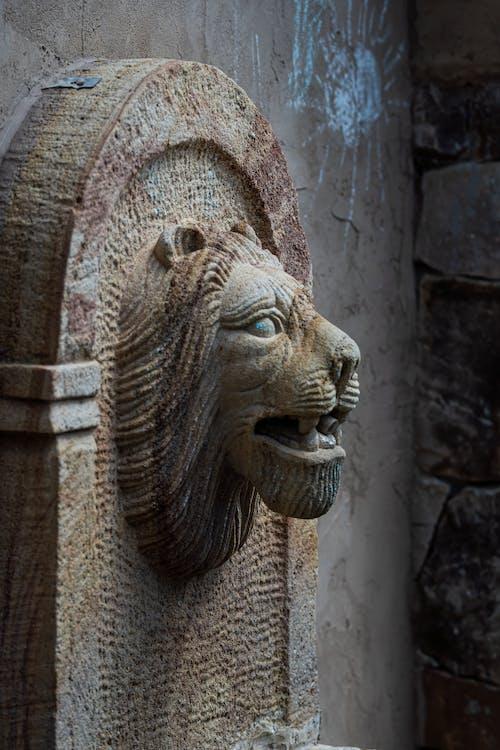 Free stock photo of animal head, art, carved stones, concrete