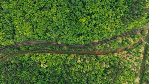 Aerial view of asphalt curvy roadway running amidst abundant forest during clear summer day