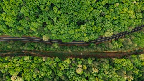 Narrow asphalt roadway amidst lush forest