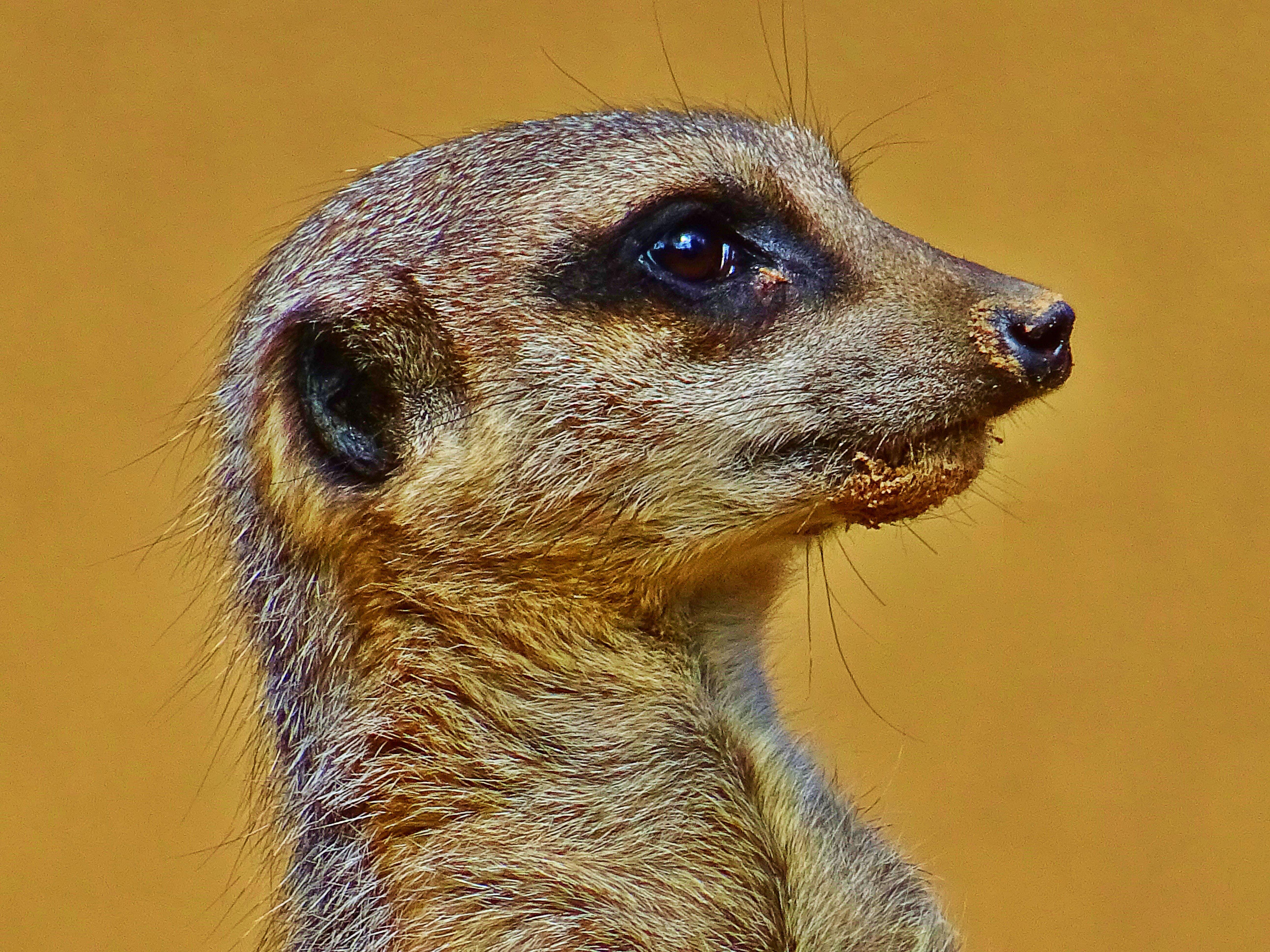 動物, 哺乳動物, 小, 暸望塔 的 免费素材照片
