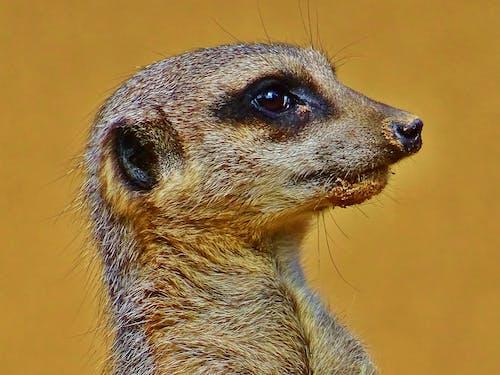 bakmak, göz, hayvan, küçük içeren Ücretsiz stok fotoğraf