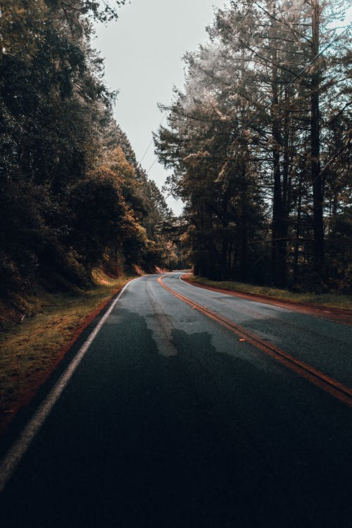 Peaceful scenery of empty asphalt roadway among gloomy coniferous trees of remote forest
