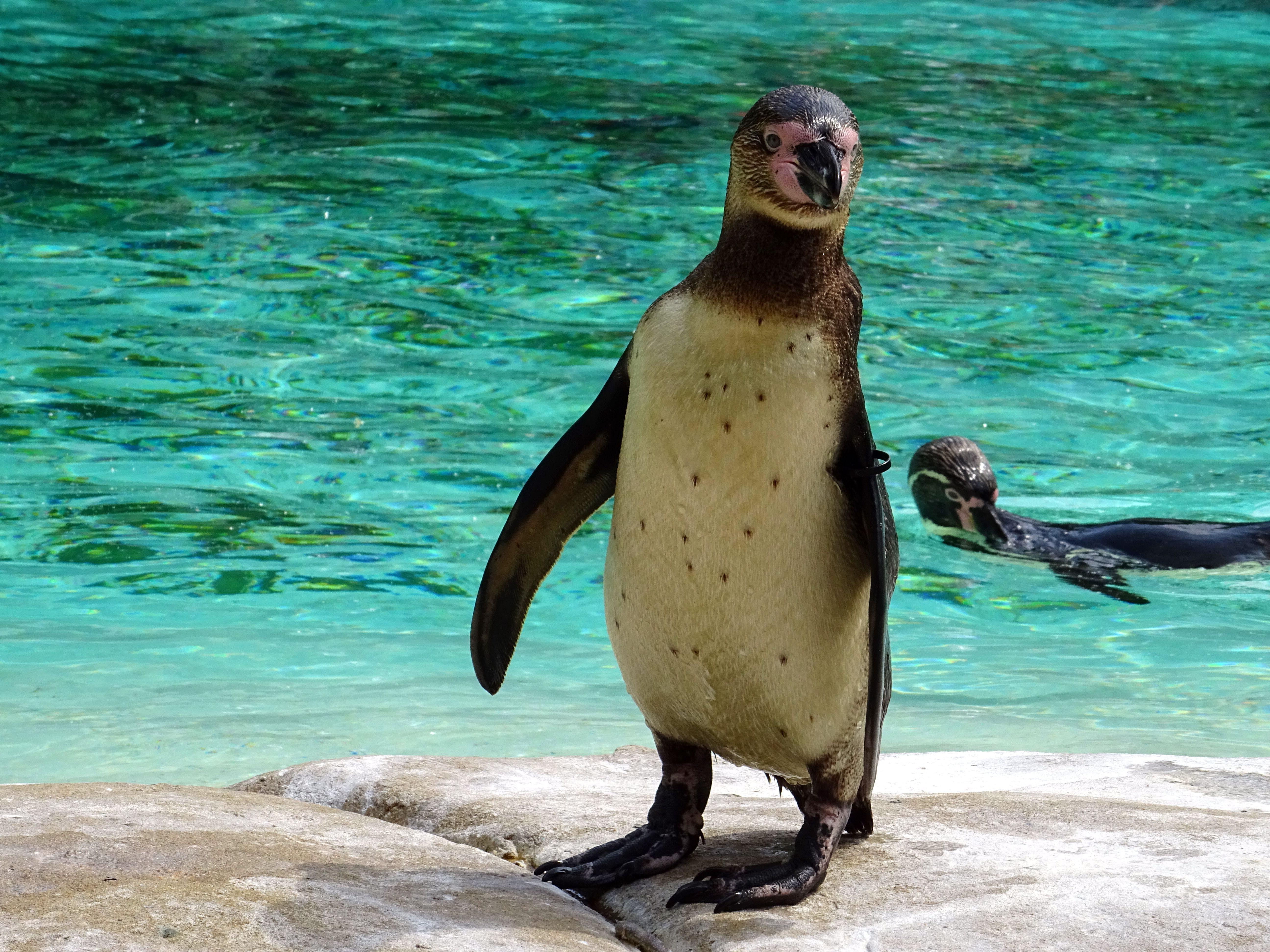 Penguin Standing on Rock Near Body of Water
