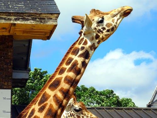 Giraffe Under Sunny Sky