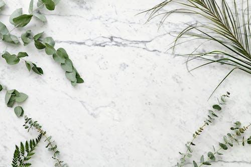 Kostnadsfri bild av anläggning, eukalyptus, eukalyptusgren