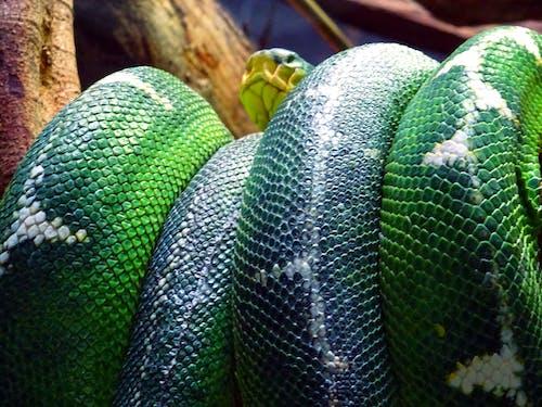 Ilmainen kuvapankkikuva tunnisteilla eksoottinen, eläin, käärme, kuvio