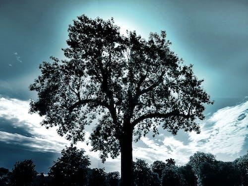 Безкоштовне стокове фото на тему «дерева, з підсвіткою, краєвид, мальовничий»