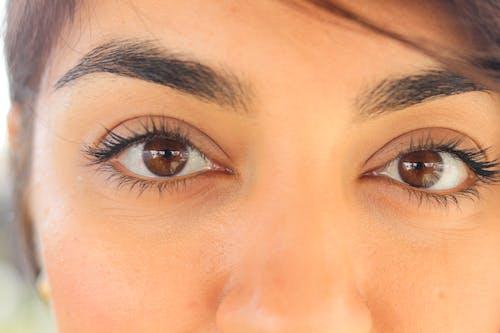 Free stock photo of baeutiful eyes, big eyes, black eye mask, brown eye