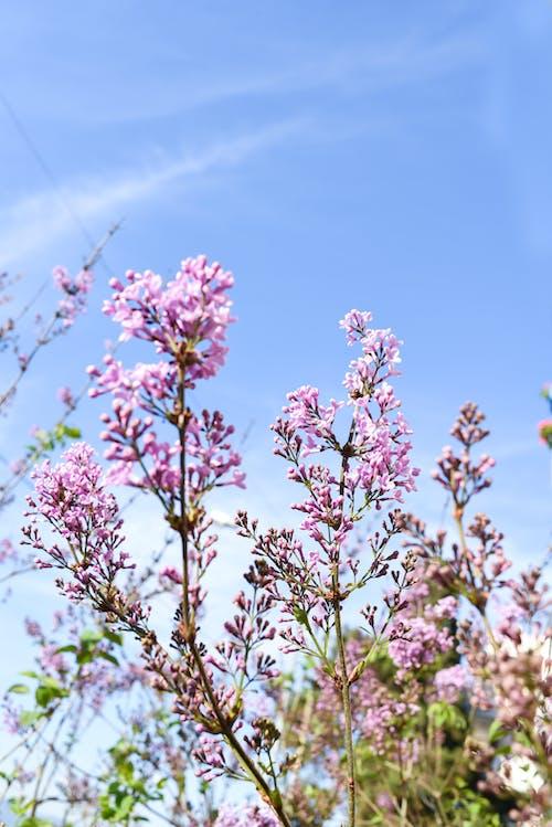 Kostenloses Stock Foto zu ast, aufnahme von unten, blauer himmel