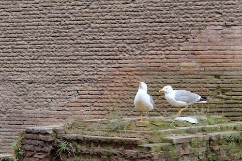 Бесплатное стоковое фото с кирпич, стена, фон, чайка