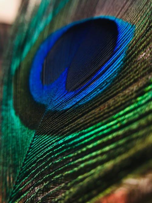 Foto stok gratis alam, aneka warna, bagus sekali