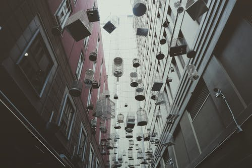 From below of various birdcages hanging on street between modern buildings in Sydney city district