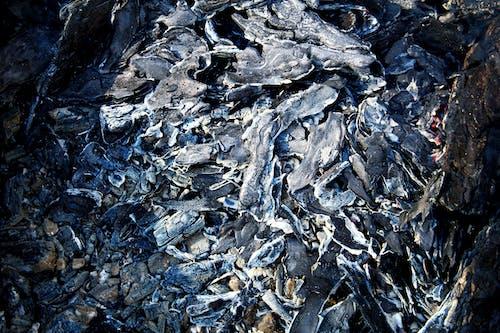 Бесплатное стоковое фото с горящий, дерево, мертвый, пепел