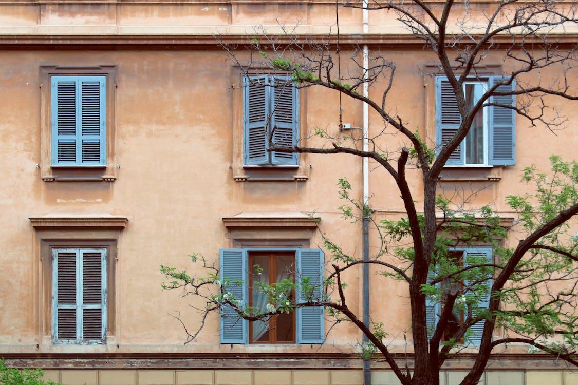 árbol, ciudad, edificio