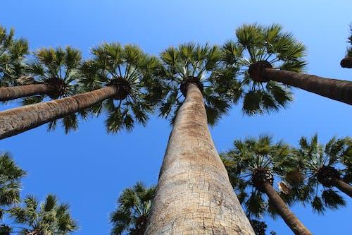 Бесплатное стоковое фото с дикий, небо, пальма, природа
