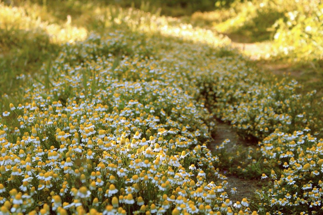 hřiště, kytka, léto