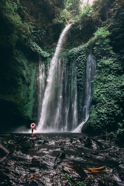 Fotobanka sbezplatnými fotkami na tému džungľa, Indonézia, krása prírody, majestátny