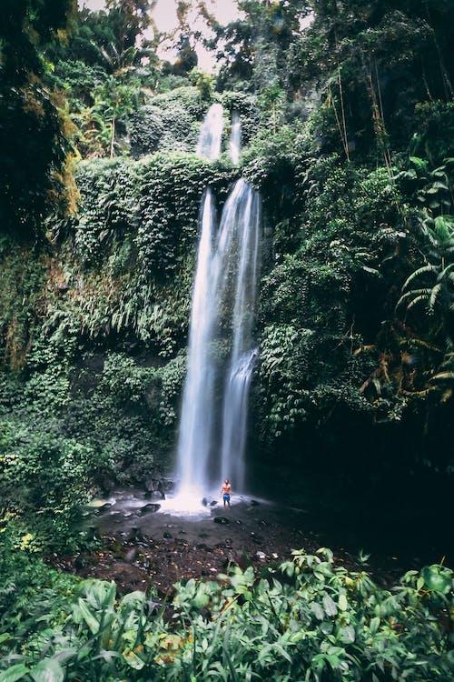 Fotos de stock gratuitas de belleza en la naturaleza, bosque tropical, cascada