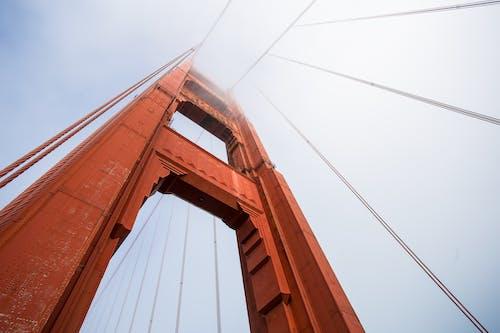 Robak Widok Na Most Golden Gate