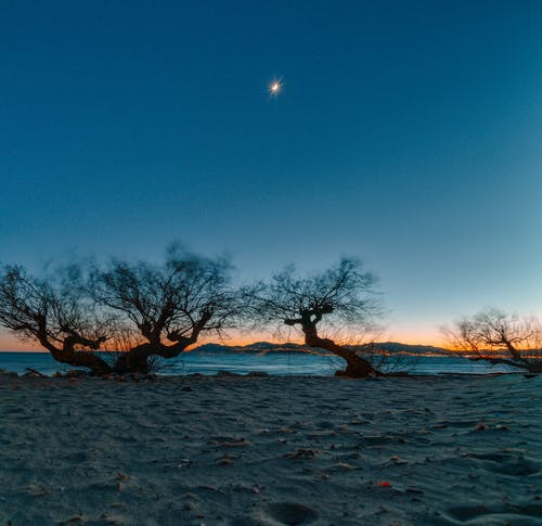 Leafless Tree on Snow Covered Ground during Sunset