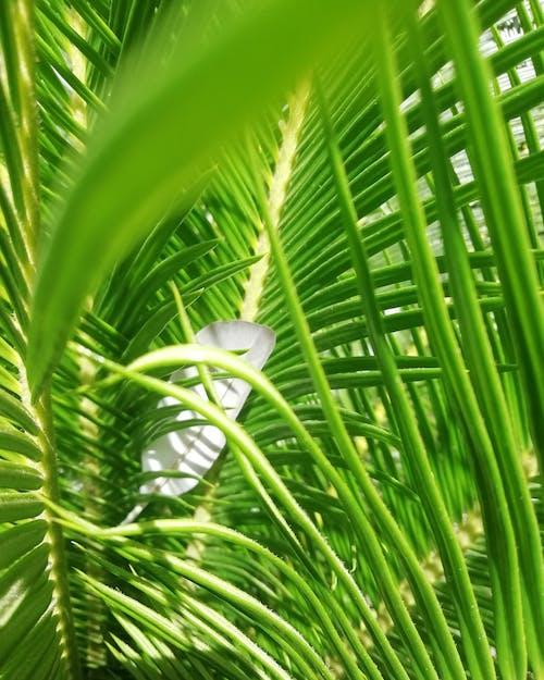 Photos gratuites de arbuste, bio, biologie