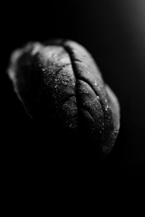 Kostenloses Stock Foto zu arte abstracto, blanco negro, hoja