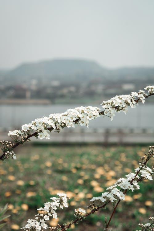 White Flowers Near Body of Water