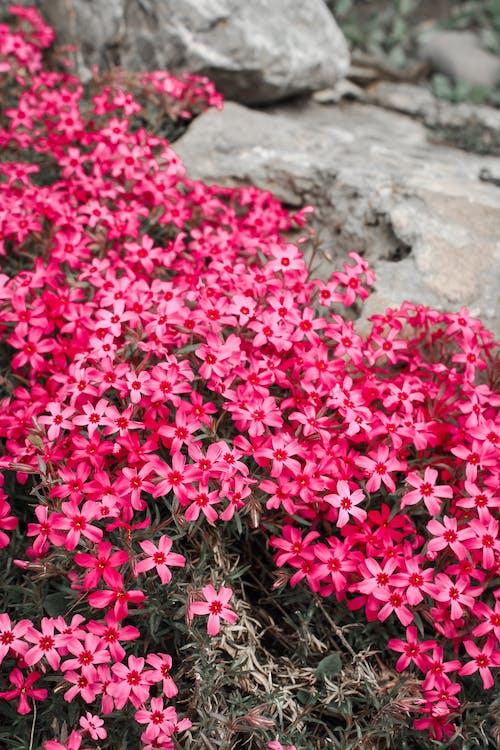Pink Flowers on Gray Concrete Floor