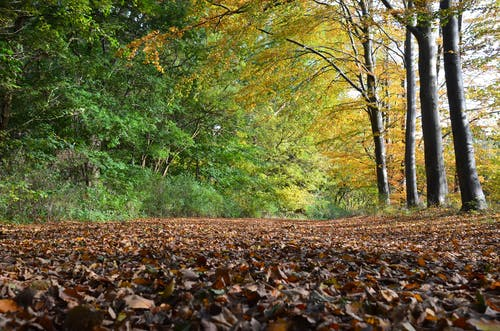 Forest path covered with fallen leaves