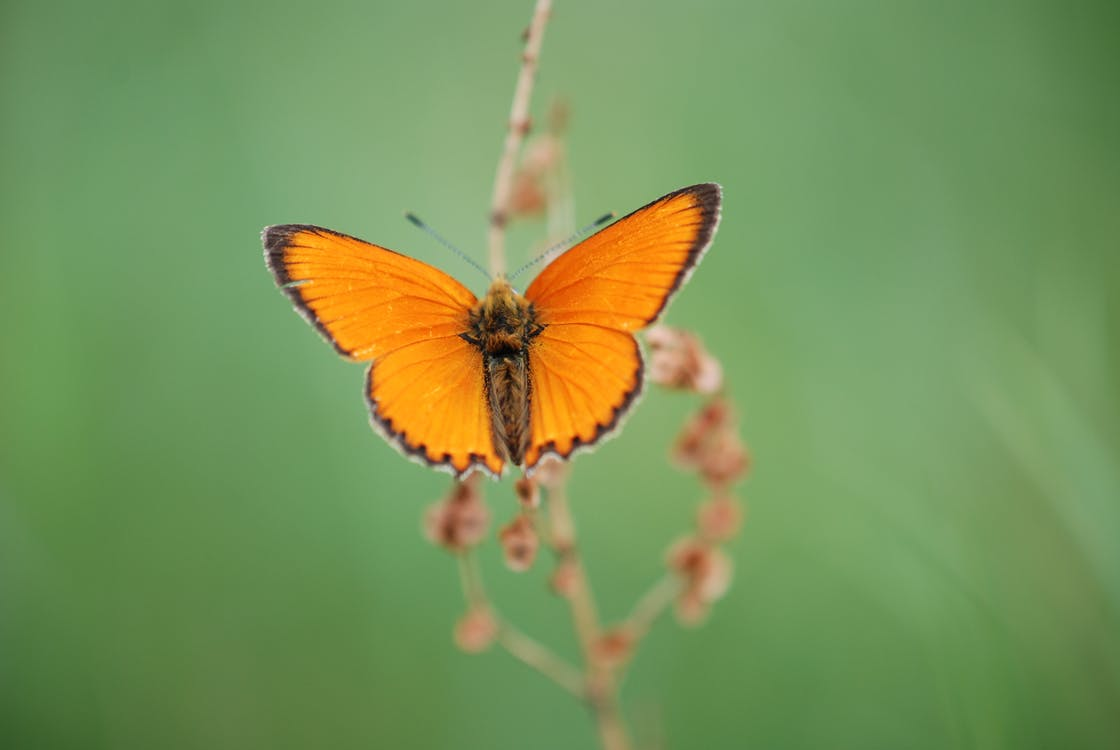 Colorful butterfly on plant twig in park