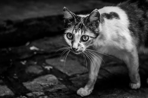 White and Black Cat on Black Concrete Floor