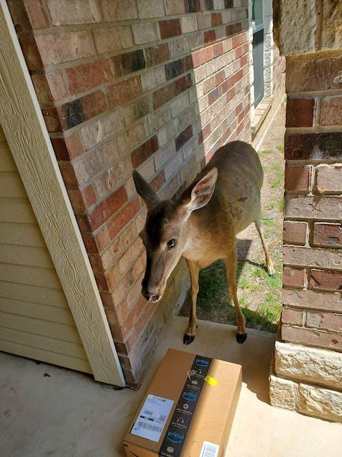 Free stock photo of deer, delivery, outdoor adventure