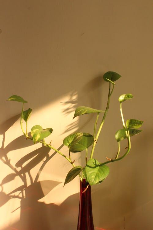 Gratis lagerfoto af arrangement, beige baggrund, belyse, blad