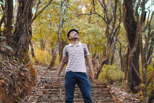 Free stock photo of beautiful, forest background, greenary, guy