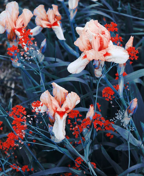 Bright blooming flowers with tender petals in park