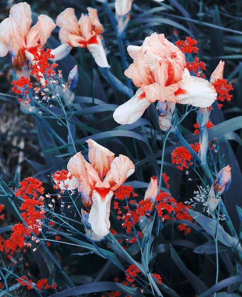 Kostnadsfri bild av arom, avrundad, blad, blomma