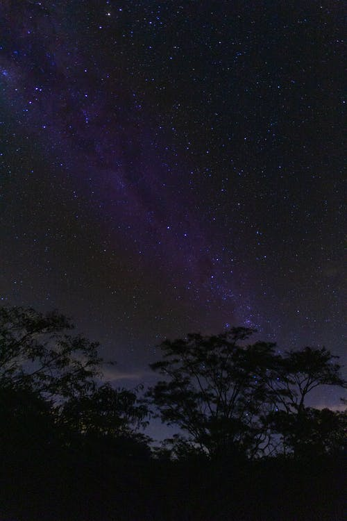 Milky Way night sky above trees