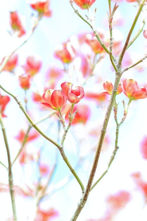 Pink Flowers on Brown Stem
