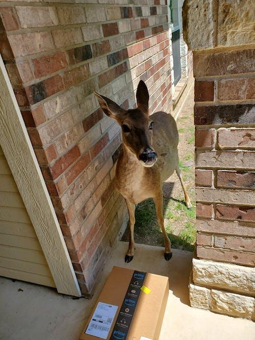 Free stock photo of deer, entryway, outdoor adventure
