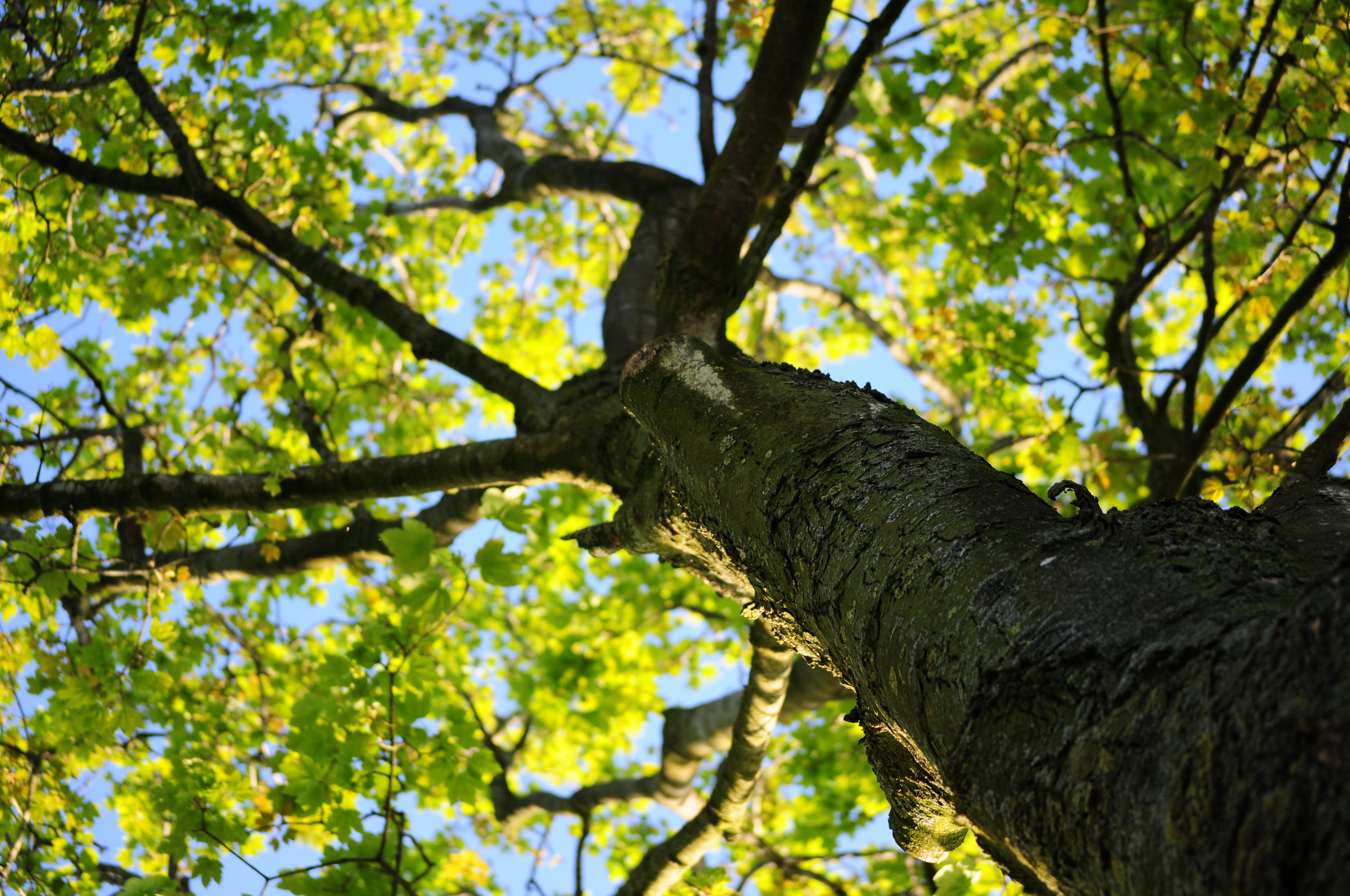 Low-angle Photo of Green Leafed Tree