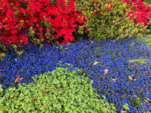 Free stock photo of color, plants, spring