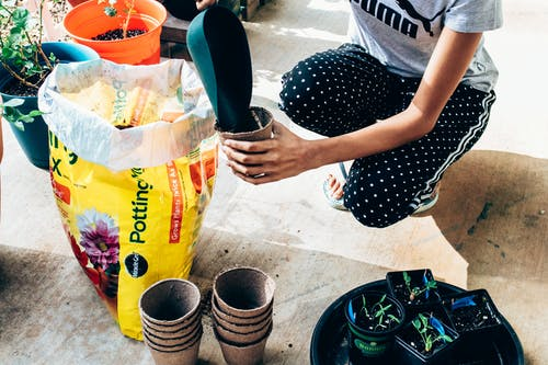 From above of unrecognizable woman in casual clothes pouring soil from big plastic bag in small pots while planting seedlings in hothouse on sunny day