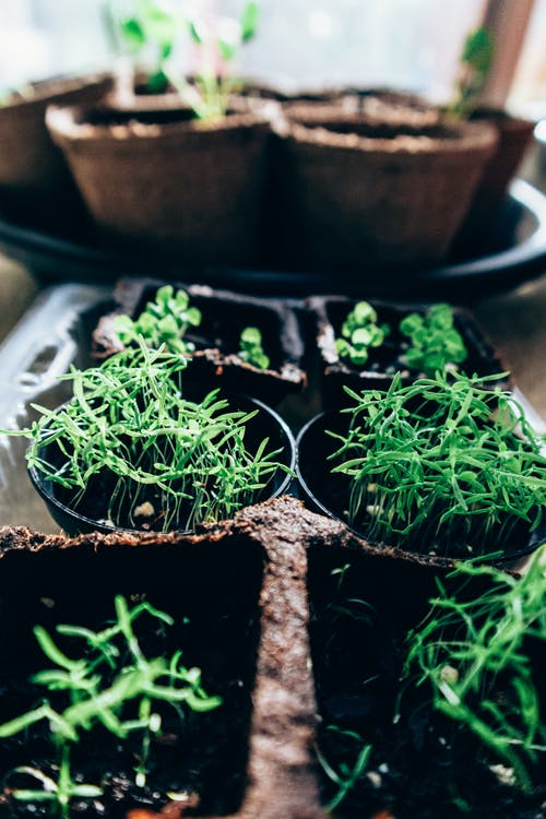 Paper pots with young green plants