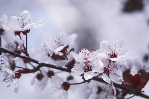 Ảnh lưu trữ miễn phí về bình yên, cành cây, cánh hoa