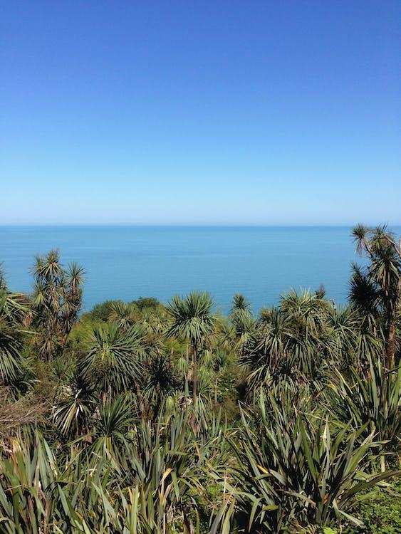 Free stock photo of black sea, landscape, summer