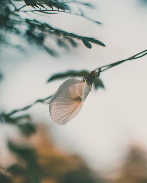 Fotobanka sbezplatnými fotkami na tému denné svetlo, divočina, exteriéry, farba