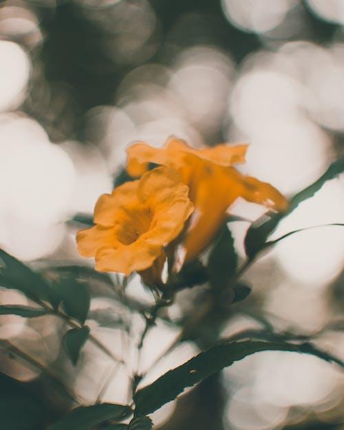 Fotobanka sbezplatnými fotkami na tému dekorácia, farba, flóra, jasný