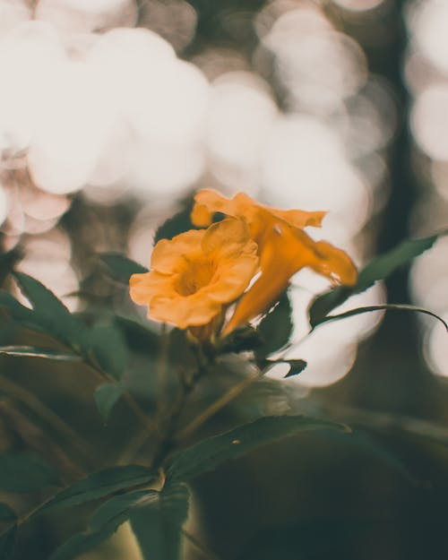Yellow Flower in Tilt Shift Lens